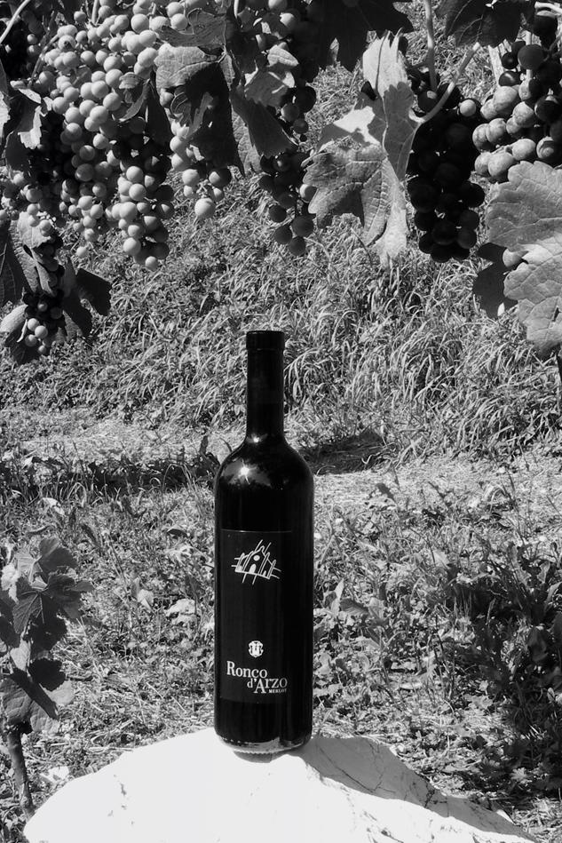 vini ticinesi